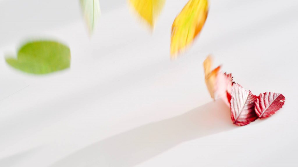 Gekleurde wegwaaiende bladeren © 2017 Matthijs Jonker Fotografie