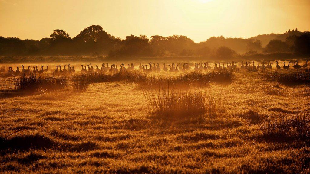 zonsopkomst-ganzen-glimmen-drenthe