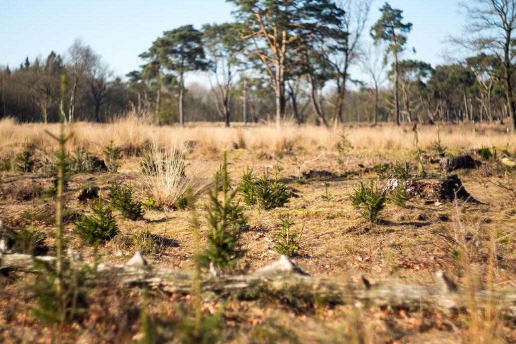 Oud & nieuw, natuurgebied Schipbord, Drenthe © 2018 Matthijs Jonker Fotografie