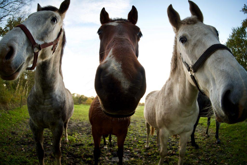 Paarden fisheye Balloërveld Drenthe © 2018 Matthijs Jonker Fotografie