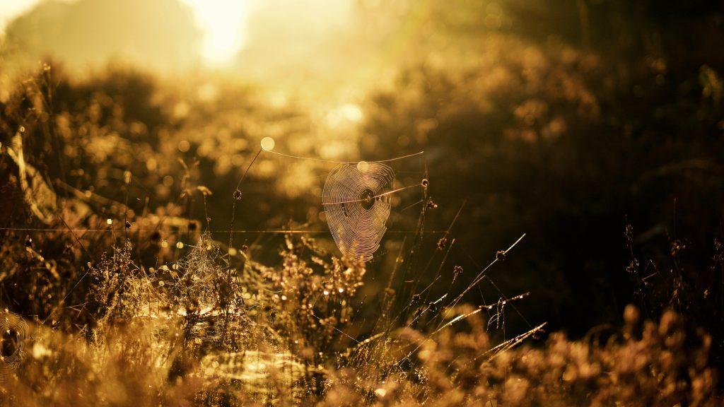 Spinnenweb zonsopgang, Balloërveld, Drenthe © 2018 Matthijs Jonker Fotografie