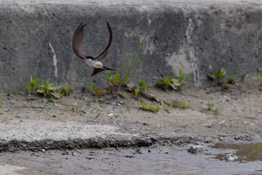 Wegvliegende vogel Roemenië © 2017 Matthijs Jonker Fotografie