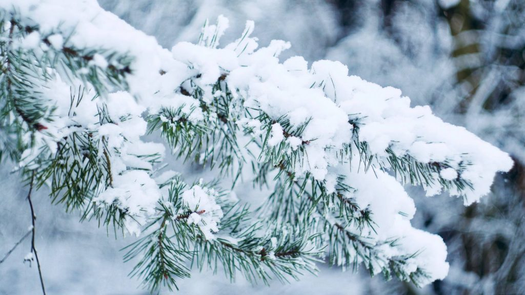 Winters takken, Gasterense Duinen Drenthe © 2018 Matthijs Jonker Fotografie