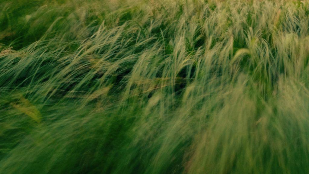 Wuivend gras, Loonerdiep, Loon, Drenthe © 2016 Matthijs Jonker Fotografie