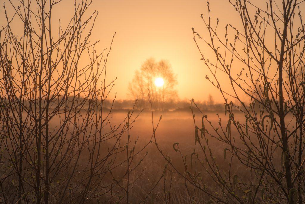 Zonsopkomst Balloërveld Drenthe © 2018 Matthijs Jonker Fotografie
